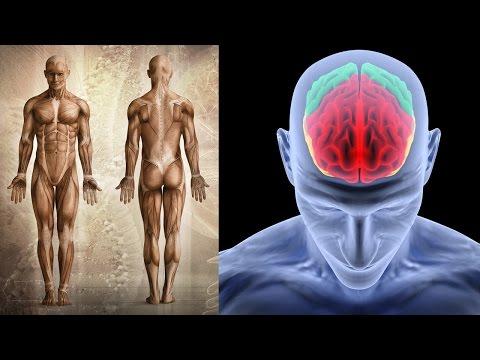 Schmerzen im unteren Rücken mit Endometriose