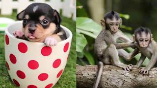 Cute baby animals Videos Compilation cute moments of the animals - Cutest Animals On Earth #3