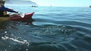 More Seal and Kayak Antics