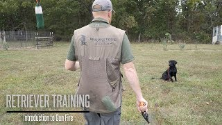 Introduce Your Labrador To Gunfire - Hunting Dog Training