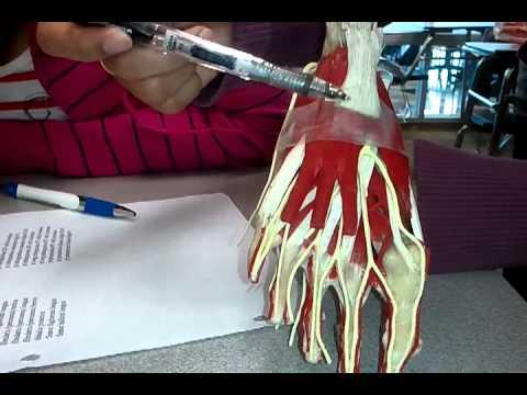 Physische Rehabilitation an den Knieverletzungen