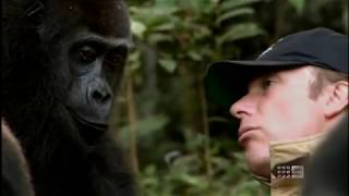 Human and Gorilla Reunite after 5 years
