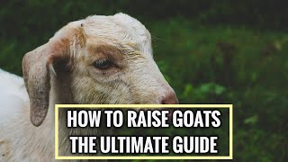 Goats 101 - Learn everything in 13 minutes