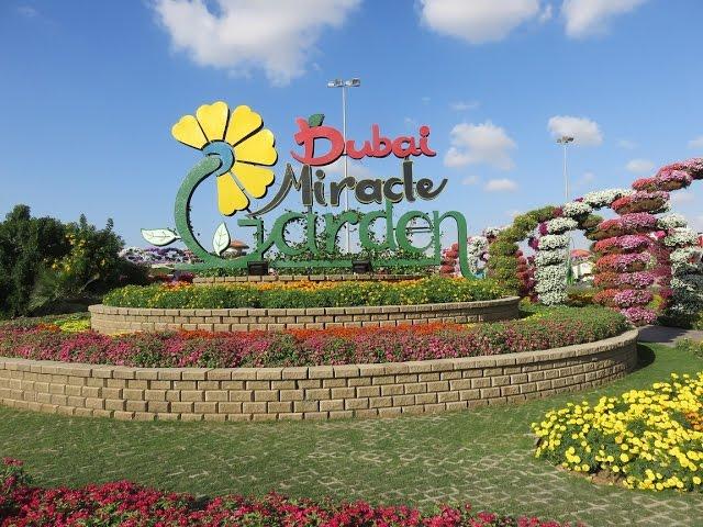 sportourism.id - Dubai-Miracle-Garden-Taman-Bunga-Terbesar-di-Tengah-Gurun-Pasir