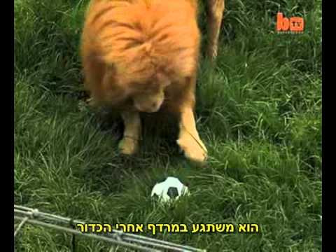 חולה על כדורגל: תנו כבוד למלך המגרש!