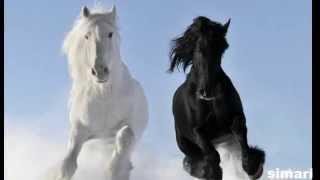 Релакс с коне