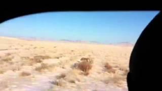 Охота на волков Казахстан(Павлодар)