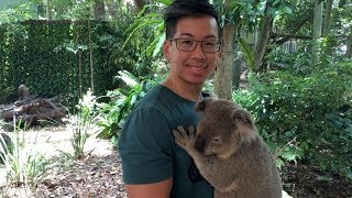 Animals of Australia: Lone Pine Koala Sanctuary + Australia Zoo (2017)