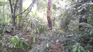 Мелодия дождя. Гандхарва Веда