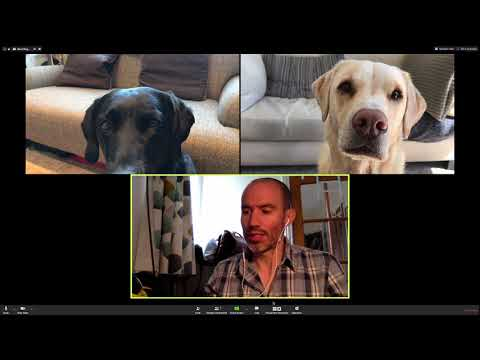 Guy hosts an employee zoom meeting with his dogs