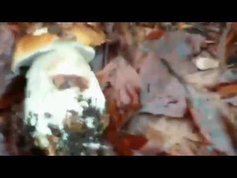 Antibiotici di trattamento di fungo di piede