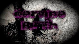 CERVINE BIRTH, uno de los videos más buscados de Internet  | DrossRotzank