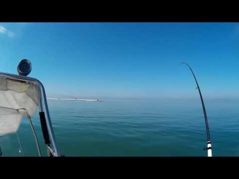 Su che prendere un nelma la nostra pesca