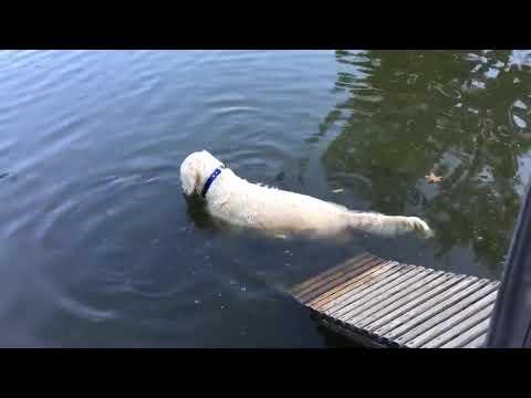 Ο σκύλος... ψαράς