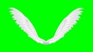 animated angel wings - green screen effect