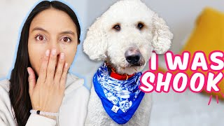 BEFORE YOU GET A GOLDENDOODLE 👉 Please Watch! 🙏 Shocking Things I've Learned About Goldendoodles