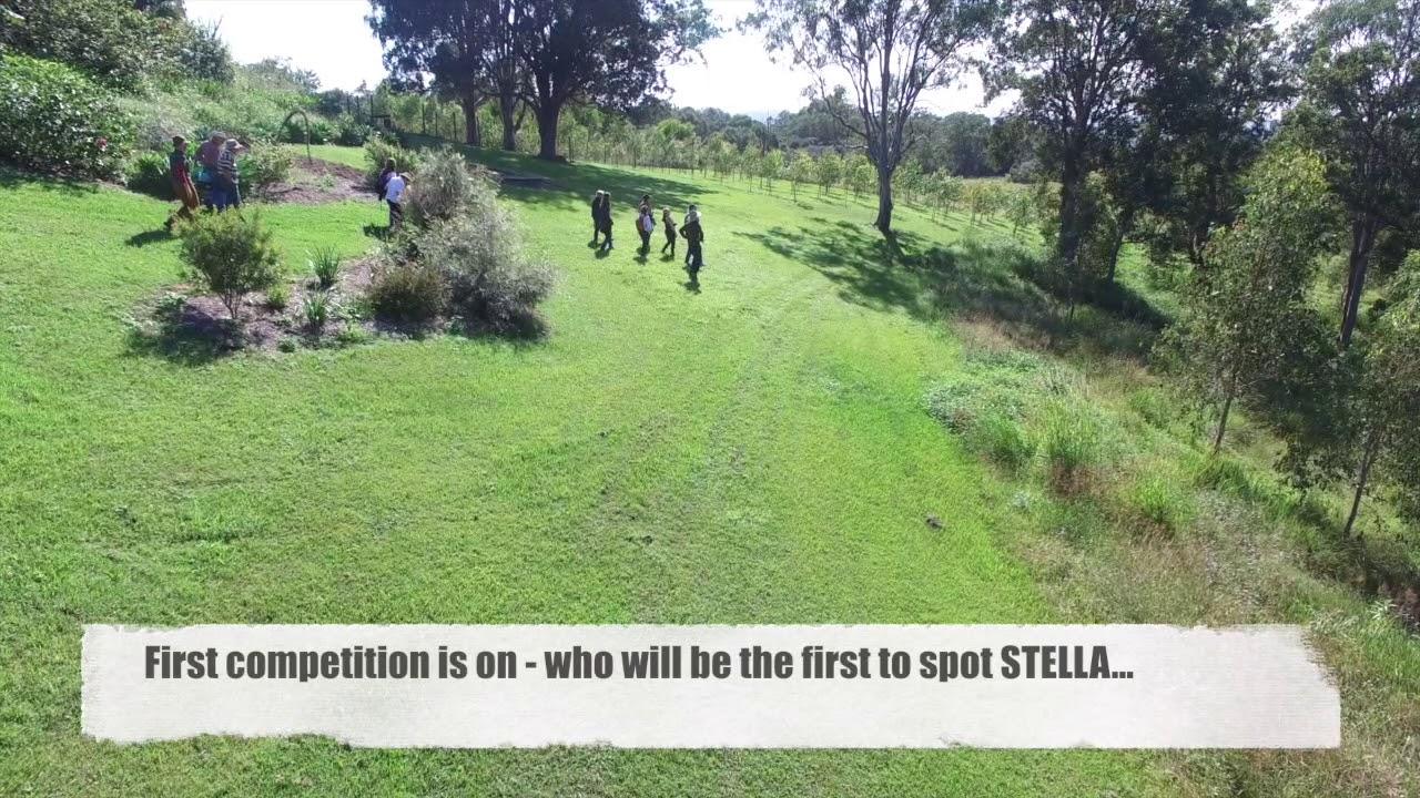 Drones overview of Koala Gardens on Wild Koala Day