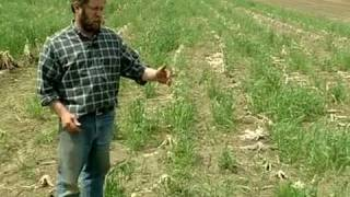 Inter-seeding Winter Rye from Vegetable Farmers and their Innovative Cover Cropping Techniques