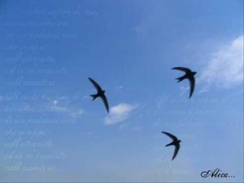 Significato della canzone Le rondini di Lucio Dalla
