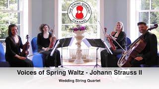 chopin spring waltz violin tutorial - TH-Clip