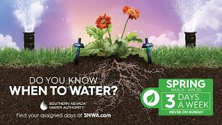 You can water 3 days a week in spring, but your plants and grass can thrive on less.
