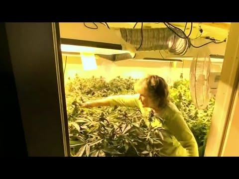 Great-grandmother battles Ypsilanti Township over number of medical marijuana plants