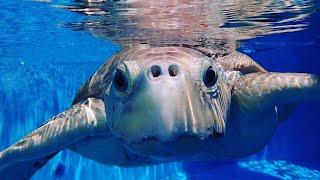 Virtual Field Trip: Marineland Dolphin Adventure
