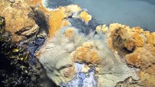 Brine Pool: Hot Tub of Despair | Nautilus Live