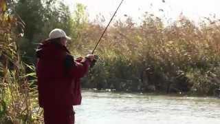 Как ловить сазана в октябре на нижней волге
