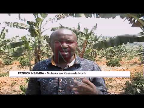 Omubaka Patrick Nsamba siwakwesimbawo ku kkaadi ya NRM