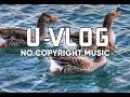 EMERALD SEAS - AARON KENNY 🎶  U-VLOG NO COPYRIGHT MUSIC