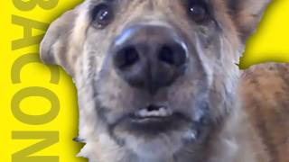 Die besten 100 Videos Talking animals - Ultimate dog tease