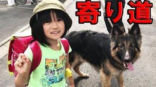シェパード犬子供達と寄り道謎の販売機に挑戦German Shepherd Dog