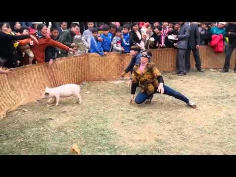 Lễ hội Truyền thống Làng Phú Diễn - Trò chơi bắt lợn