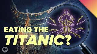 The Most Extreme Life Forms On Earth… And Beyond?