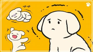 6 Reasons Why Your Dog Is Shaking or Shivering