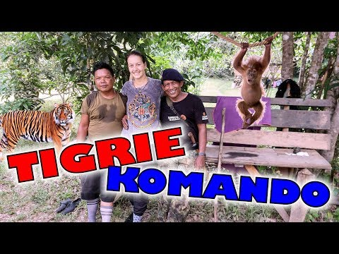 NAPADOL NÁS TIGER?! | Bývame pri orangutanoch
