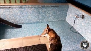 Concours : remplissage du Dog Pool !