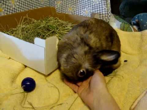 What Else Can I Use As Bedding For My Netherland Dwarf