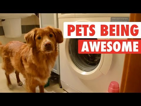 Video: Pets Are Awesome