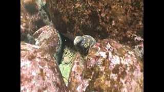 eel cave 2