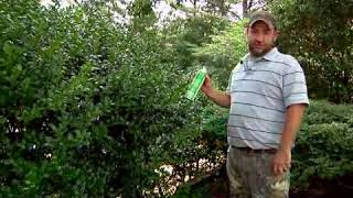 How to Keep Bees Out of Shrubs