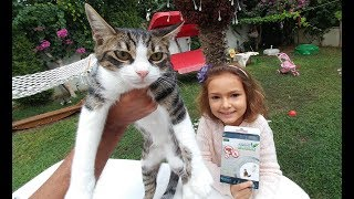Minik kedicikler Ponçik, Tarçın ve Pamuk için dış parazit aşısı yaptık. Parazit tasması taktık