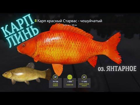 Русская рыбалка 4 (рр4) озеро янтарное фарм карп