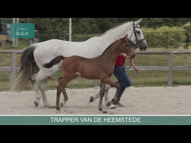 TRAPPER VAN DE HEEMSTEDE