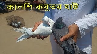 gorra pigeon price in bd - TH-Clip