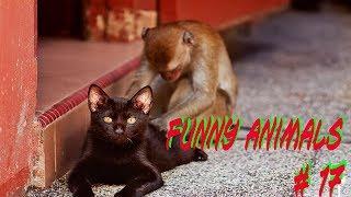 Приколы с животными №17 FUNNY ANIMALS смешные животные.