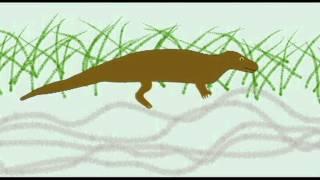 Synapsid Reptiles - Evolution of Mammals