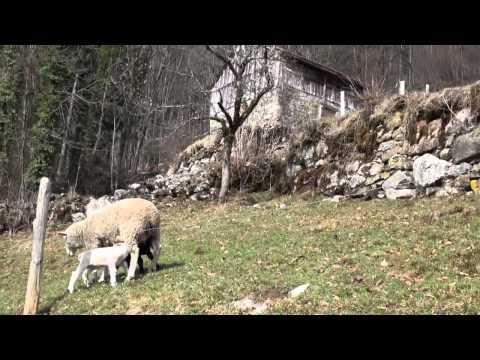 Swiss Knife Valley, Muotathal, Guggeli (Pass)