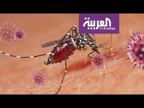 العرب اليوم - شاهد: هل تنقل الحشرات